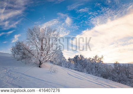 Small Fragile Tree Covered With Hoarfrost Lonely Grows From A Snowdrift Against The Backdrop Of Wint