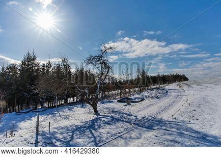 Spring Morning. Winter Landscape - Frosty Trees In Snowy Forest In The Sunny Morning. Tranquil Winte