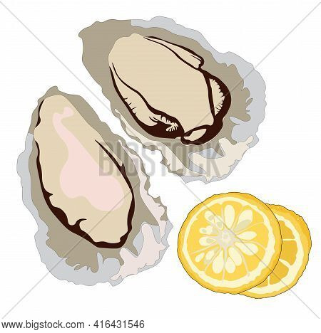 Oysters Vector Stock Illustration. Clam Shells And Lemons. Fine Sea Food For The Menu. Isolated On A