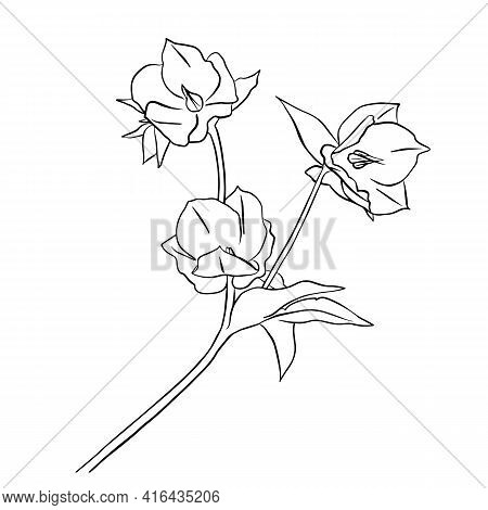 Vector Illustration Of Hellebore. Doodle Style. Suitable For Design, Printing, Decoration, Textiles,