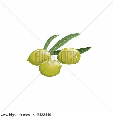 Green Olives With Leaves In Cartoon Style.  Flat Simple Design Element For Packaging, Logos And Othe