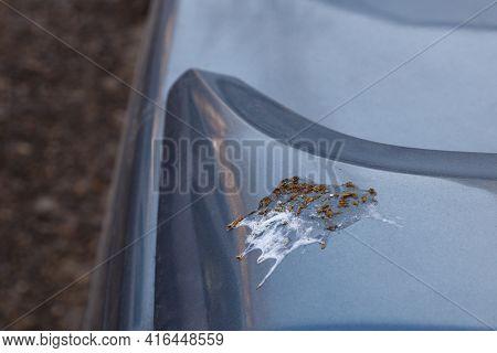 Bird Shin On Car Surface - Close-up With Selective Focus