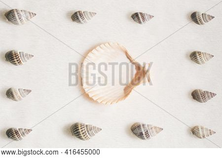 Summer Composition With Different Seashells On Beige Beach Sand Background. Difference, Individualit