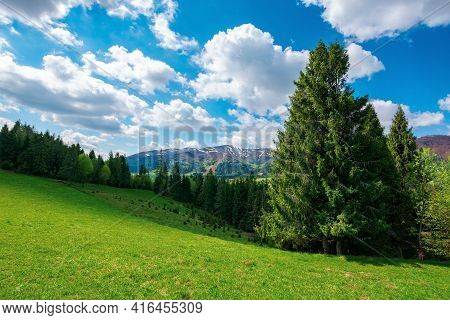 Forest On The Grassy Hill. Beautiful Nature Landscape In Spring. Snow Capped Mountains In The Distan
