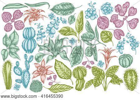 Vector Set Of Hand Drawn Pastel Ficus, Iresine, Kalanchoe, Calathea, Guzmania, Cactus Stock Illustra
