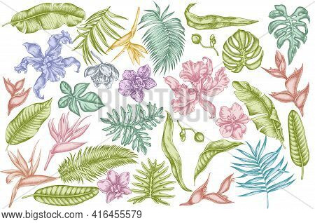 Vector Set Of Hand Drawn Pastel Monstera, Banana Palm Leaves, Strelitzia, Heliconia, Tropical Palm L