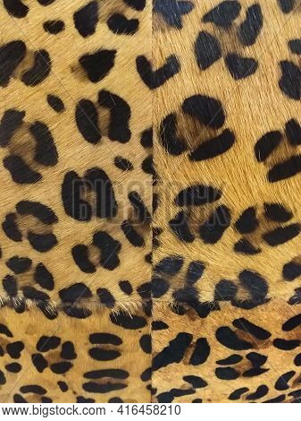 Leopard Skin Background, Natural Orange Fur With Black Spots. Wild African Animal Skin Pattern. Wild