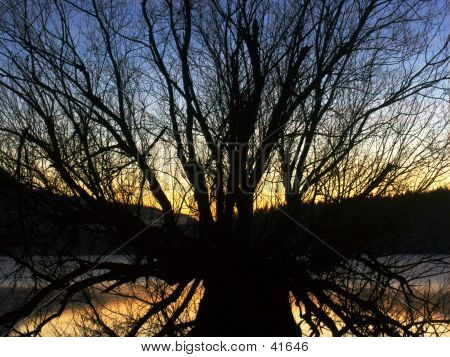 Winter Sunset Through The Branches