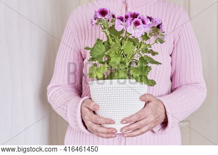 An Elderly Caucasian Faceless Woman In Pink Cardigan Holding In Her Hands A Potted Blooming Plant Pe