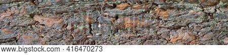 Texture Of Pine Bark. Panoramic Photo Of The Bark Of Pine. Detailed Tree Bark Texture.