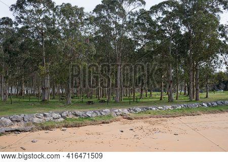 Rodiles Recreation Area Next To The Beach. Eucaliptus And Pine Trees.asturias, Spain