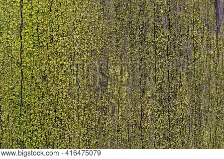 Moss On Wood. Mossy Board. Green Natural Background.