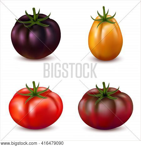 3d Realistic Set Of Tomatoes With Different Types And Colors Isolated On White. Different Varieties