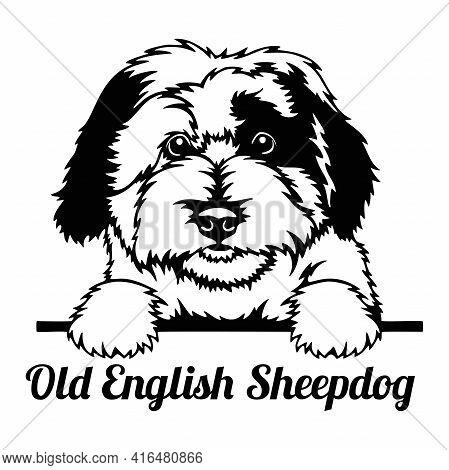 Old English Sheepdog Peeking Dog - Head Isolated On White