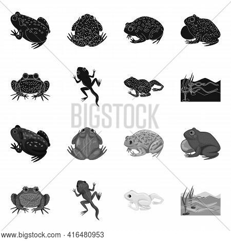 Isolated Object Of Wildlife And Bog Logo. Set Of Wildlife And Reptile Vector Icon For Stock.