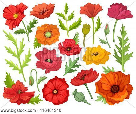 Poppy Flower Vector Cartoon Icon Set . Collection Vector Illustration Poppy Red On White Background.