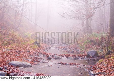 Mountain Brook Covered With Fallen Leaves On A Misty Autumn Day