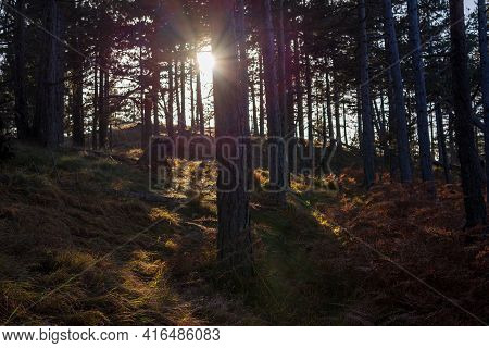 Sunbeams Breaking Through The Conifer Trees In The Woods