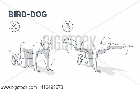 Man Doing Bird Dog Exercise Home Workout Guidance Vector Illustration.