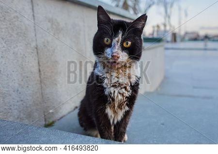 Dirty Black And White Stray Cat Sits On Sidewalk In Antalya.
