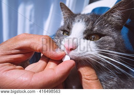 Owner Giving A Pill Or Tablet To Sick Cat. Pills For Pets. Meds For Animals. Anthelmintic For Pets