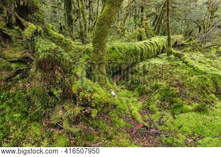 Moss Covered Fallen Tree Trunk In Rainforest In Fiordland National Park, New Zealand