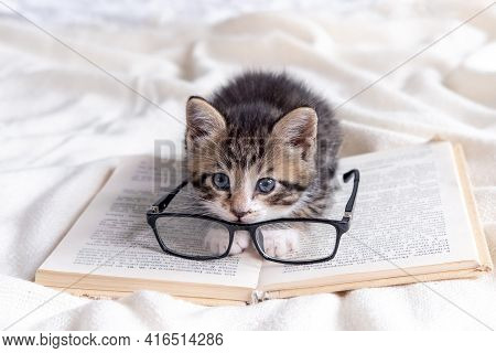 Striped Kitten With Book And Eyeglasses Lying On White Bed. Clever Cute Little Domestic Cat. Educati