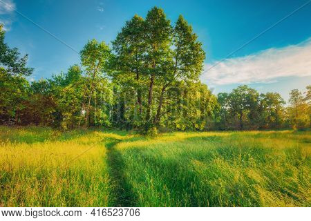 Summer Sunny Forest Trees, Green Grass, Lane, Path, Pathway. Nature Wood Sunlight.