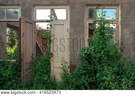 The Wall In The Room Of An Abandoned Wrecked House With Empty Windows Overgrown With Plants