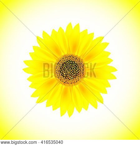 Sunflower Isolated On White And Yellow Background.vector Illustration.