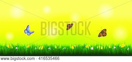 Spring Sunny Landscape With Butterflies With Grass And Flowers.life Of Insects In The Meadow.