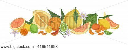 Various Tropical Citrus Fruits. Fresh Whole Lemons, Tangerine Segments, Orange Slices, Bergamot Half