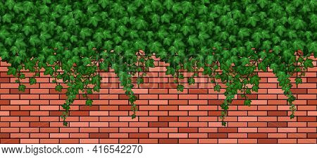 Ivy Leaves On Brick Wall.  Summer Green Ivy Foliage Overgrown On Red Brick Wall Of Building Or Fence