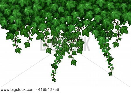 Ivy Foliage Seamless Pattern On White Background. Green Ivy Leaves And Hanging Branches, Natural Pla