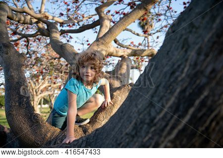 Kid Boy Trying To Climbing On The Tree. Child Climb In Adventure Park