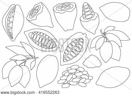 Cocoa Bean Isolated Outline Set Icon. Vector Illustration Chocolate Fruit On White Background. Vecto