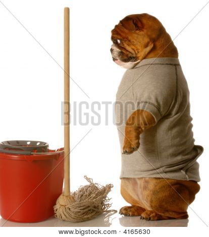 english bulldog standing up beside mop and bucket - janitor poster