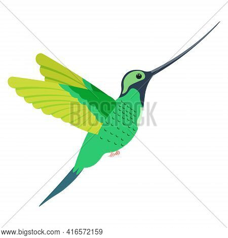 A Bright Multicolored Hummingbird, A Bird Painted In Several Colors Green Gray Light Green. Vector I
