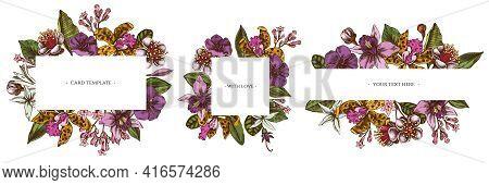 Floral Frames With Colored Laelia, Feijoa Flowers, Glory Bush, Papilio Torquatus, Cinchona, Cattleya