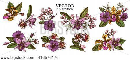 Flower Bouquet Of Colored Laelia, Feijoa Flowers, Glory Bush, Papilio Torquatus, Cinchona, Cattleya