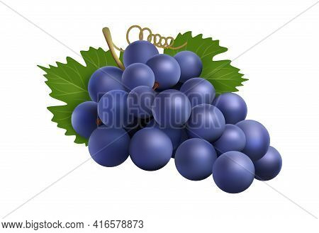 Realistic Grape Bunch. Black Winery Grapes, Isolated 3d Plant With Berry And Leaves. Eco Farm Produc
