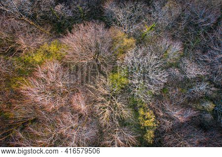 Top view of deciduous tree forest in the beginning of spring, Ardennes, Belgium