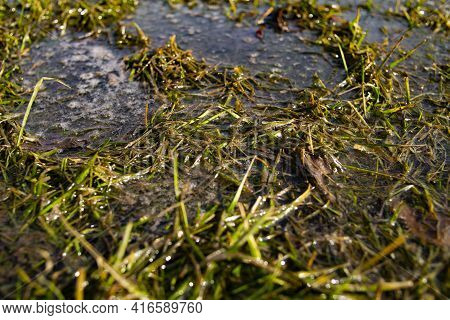 Environmental Pollution By Waste And Dirty Soapy Liquids Of Grass And Vegetation. Fuel In The Center