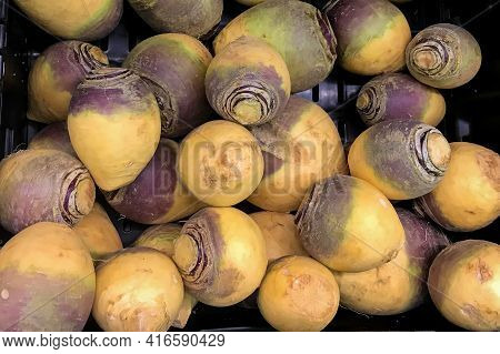 Yellow Turnips Vegetables Piled On The Market Stall. Vegetable Background
