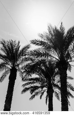 Tropical Tourism Paradise Palms In Sunny Summer Sun Gray Sky. Sun Light Shines Through Leaves Of Pal