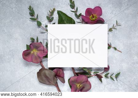 Floral Layout. White Sheet Of Paper, Branches Of Eucalyptus And Hellebore Flowers On A Gray Concrete