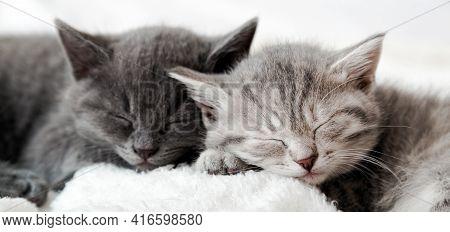 Kitten Family In Love Portrait. Adorable Kitty Noses For Valentine Day Pet Love. Couple Happy Kitten