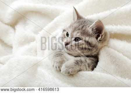 Cute Tabby Kitten Lies On White Soft Blanket. Cat Rest Napping On Bed. Comfortable Pet Sleeping In C