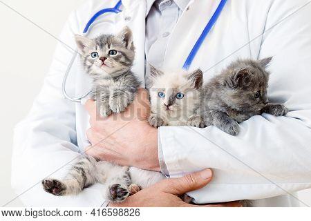 Funny Cats In Vet Doctor Hands. Doctor Veterinarian Examining Kittens. Mammal Cats In Veterinary Cli