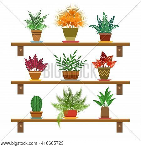 Office Plants On Shelves. Green Indoor Blooming Plants Vector Image, Home Interior Cartoon Small Pot